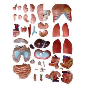 肠结构图片大全