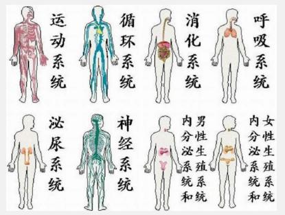 人体解剖模型全套