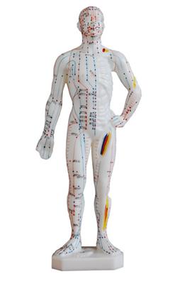 医疗经络穴位模型