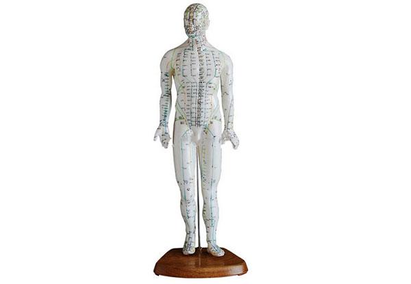 可以扎针的人体针灸模型(针灸用人体穴位模型、人体针灸穴位教学模型)