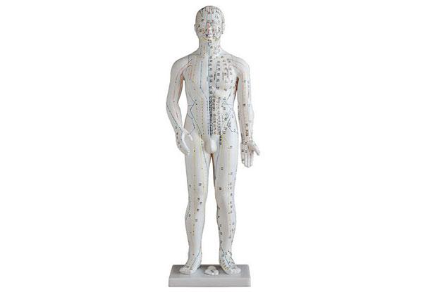 知能医学模型-人体针灸模型