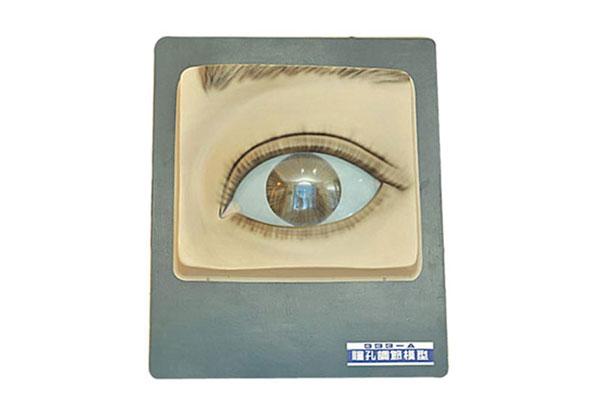 瞳孔调节模型(光控) BIX-A2134