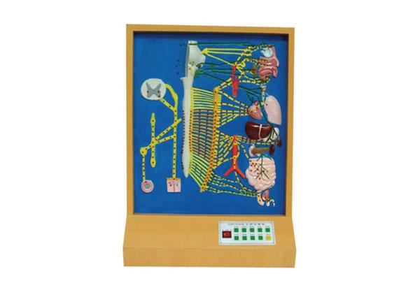 知能医学模型自主神经电动模型