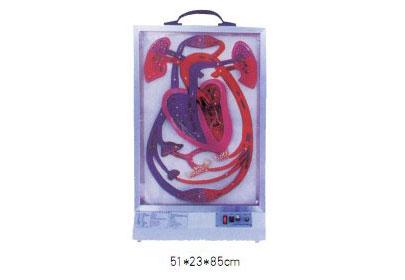 知能医学模型电动心脏搏动与血液循环系统模型