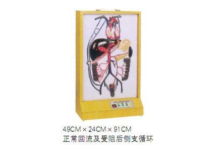 知能医学模型电动门静脉侧支循环模型 BIX-A2013