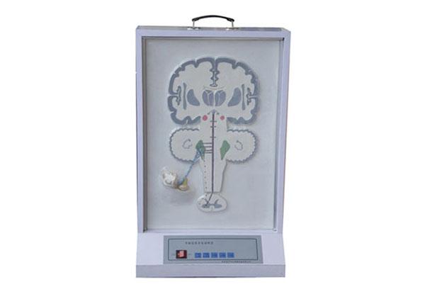 知能医学模型平衡感传导电动模型 BIX-A2123