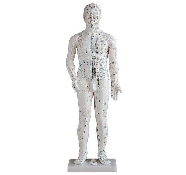 知能医学标准人体针灸模型 BIX-Y1006