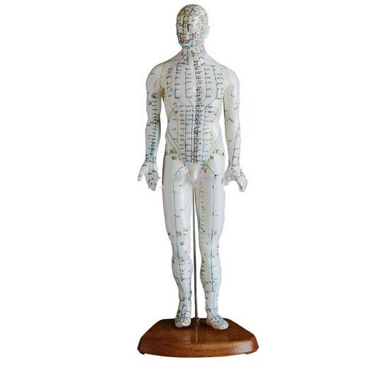 知能医学人体针灸模型(男性)50cm BIX-Y1007