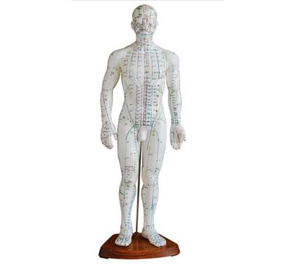 人体针灸模型(男性)50cm  BIX-Y1008