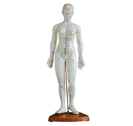 知能医学人体针灸模型(女性) 48cm BIX-Y1009