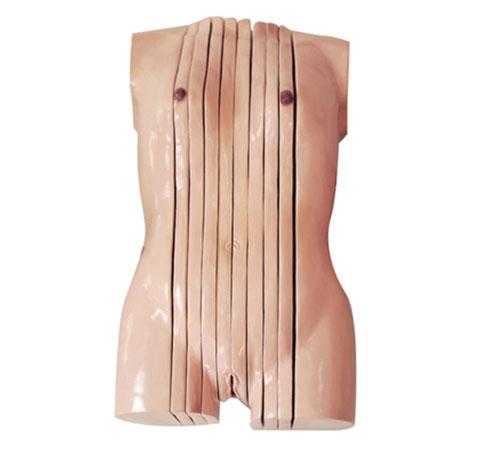 知能医学模型女性躯干失状断层解剖模型 BIX-A3120