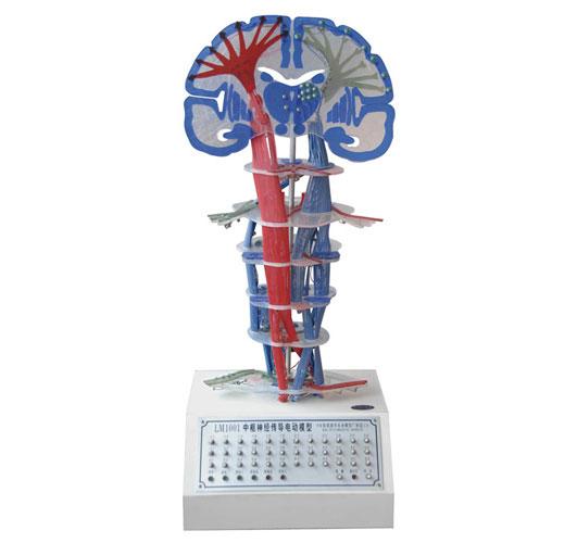 知能医学模型中枢神经传导电动模型 BIX-2101