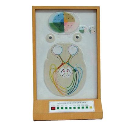 知能医学模型视觉传导瞳孔对光反射电动模型 BIX-A2102