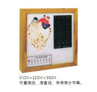智能医学模型心脏传导系电动模型 BIX-A2104