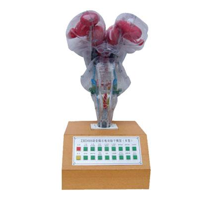 知能医学模型电动脑干模型 BIX-A2105