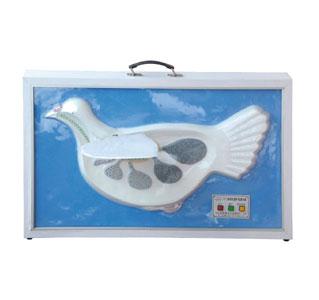知能医学模型家鸽双重呼吸演示模型 BIX-A2109