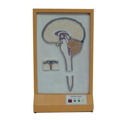 知能医学模型脑脊液循环电动模型 BIX-A2112