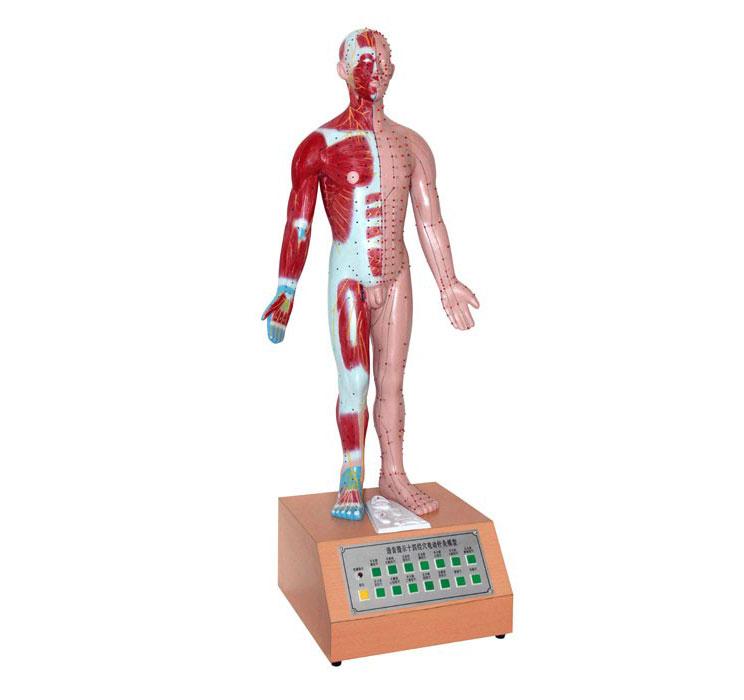 知能医学电动十四经穴针灸模型 BIX-A2126