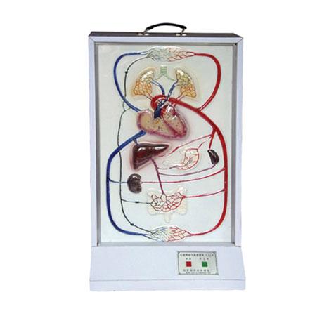 知能医学模型心脏搏动与血液循环系统电动模型