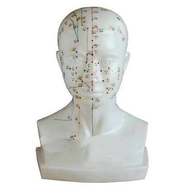 自然大小人体头部针灸模型-人体针灸模型价格-人体针灸模型厂家