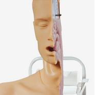 高级吞咽机制模型 BIX/H88