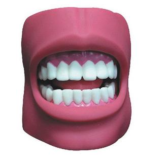 什么品牌的牙齿模型好?