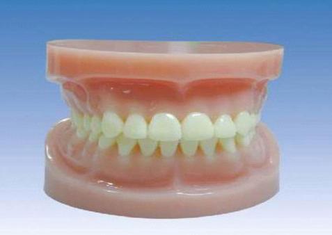 牙齿标准模型