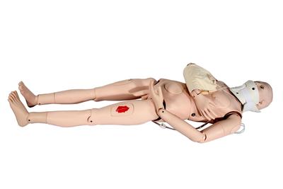 知能医学模型-闭合式四肢骨折固定训练模型