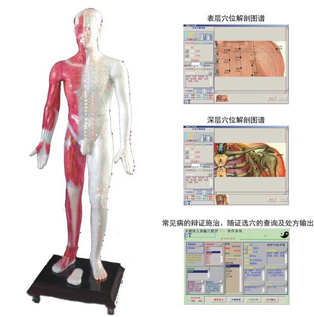 知能医学模型-人体经络模型